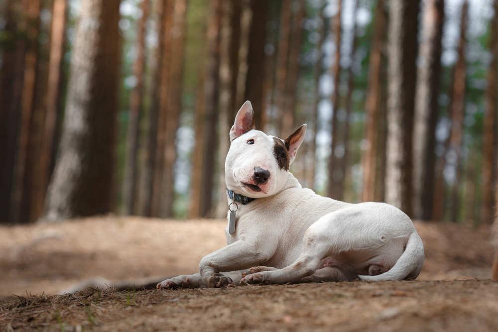 Perros Obedientes para llevar de acampada