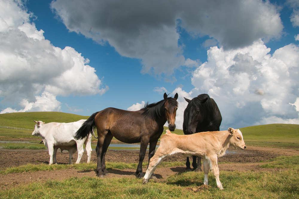 Una ruta a caballo